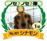 ノセノセ隊入隊証1級