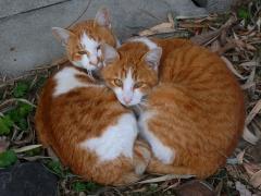 猫2s子猫2匹
