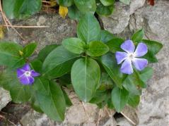 冬の花ss