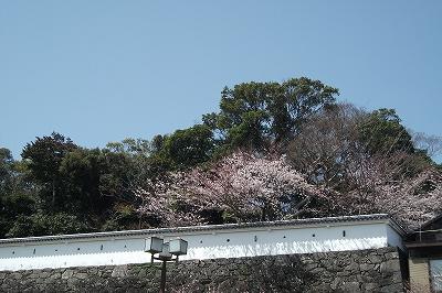ss城と桜