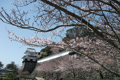 ss城郭と桜