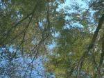 水面に映った空