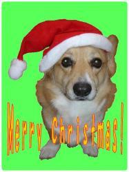 2005クリスマスカード