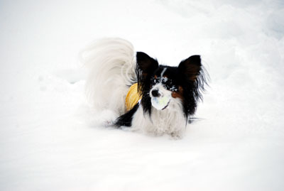 雪まみれボールだよ~