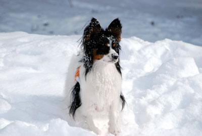 雪まみれRS君