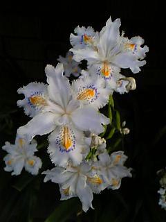 これ、なんて花?(^▽^;)