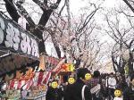 桜祭りブログ用2