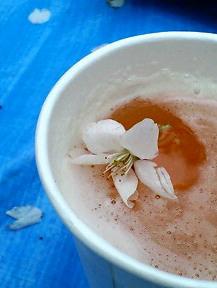 桜inビール