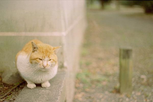 ボス猫に最接近