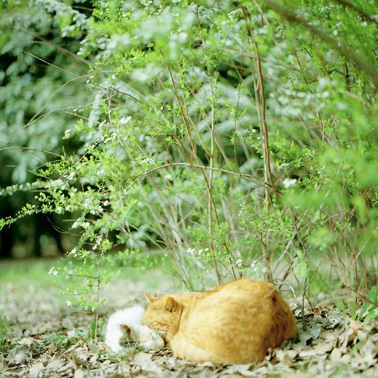 ひだまり猫