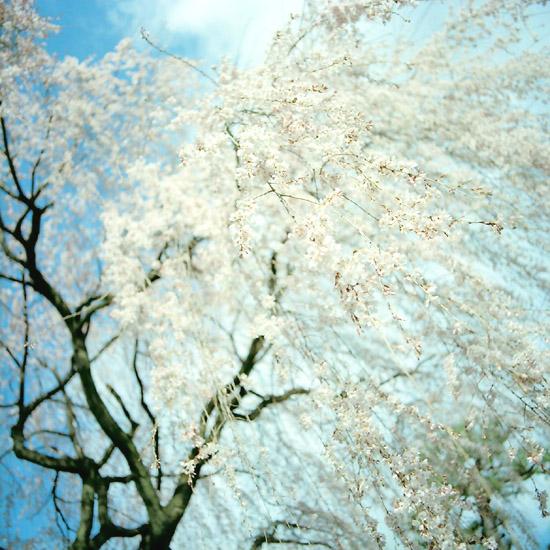 春色/本満寺