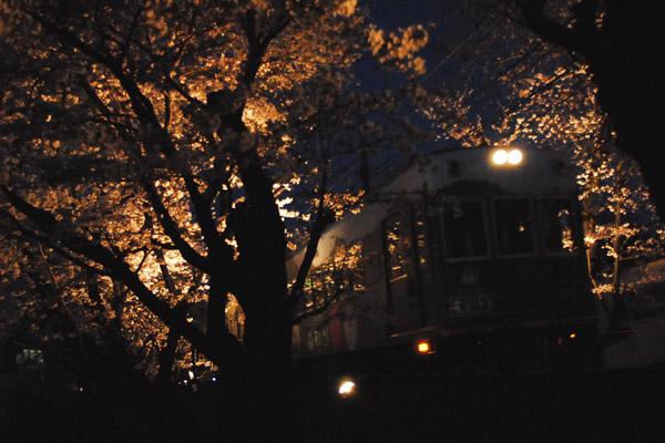 夜桜トンネル/鳴滝