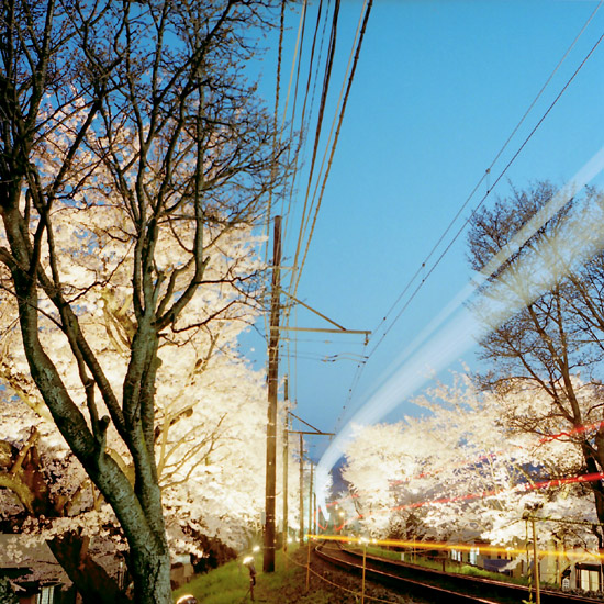流線・夜桜トンネル