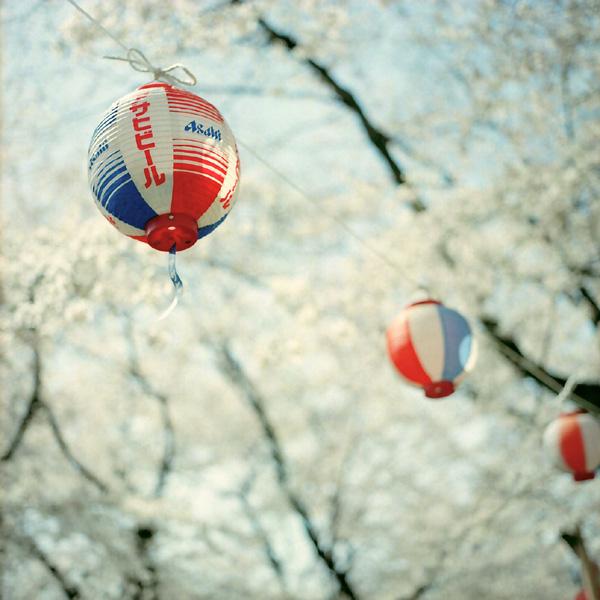 提灯/桜の頃
