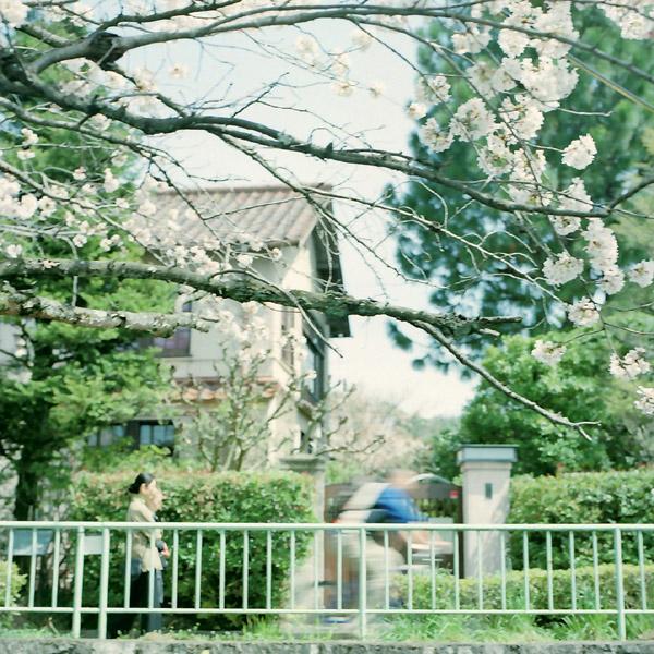 桜の頃/駒井邸住宅