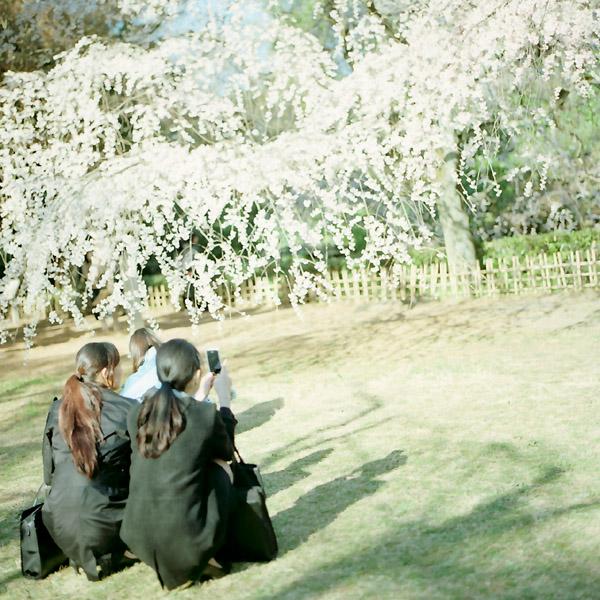 撮影風景/桜の頃