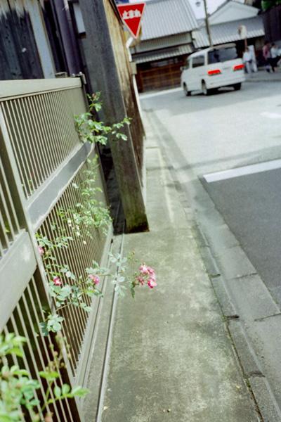 路傍の花/伏見中書島