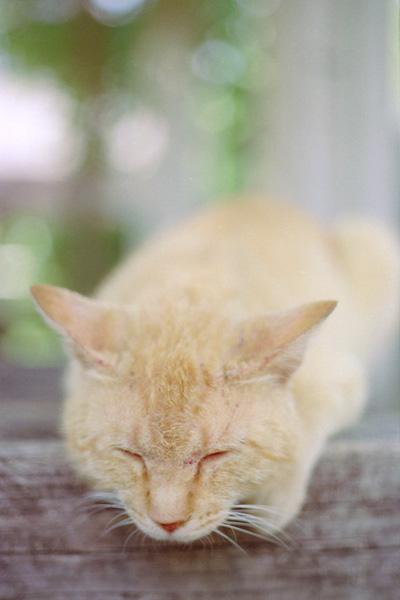 眠いニャ。。