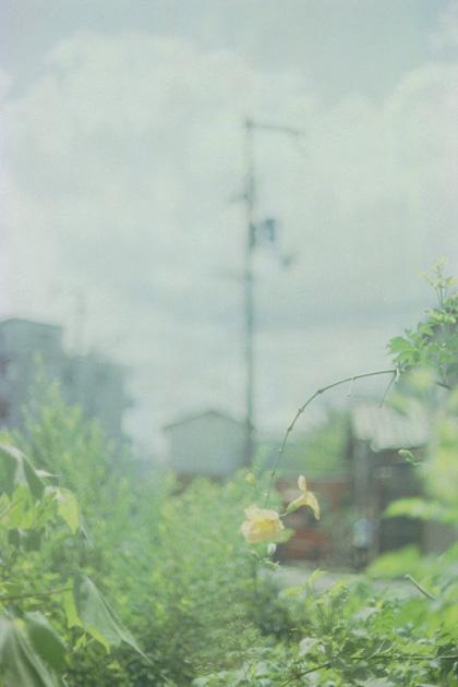 夏/空/花