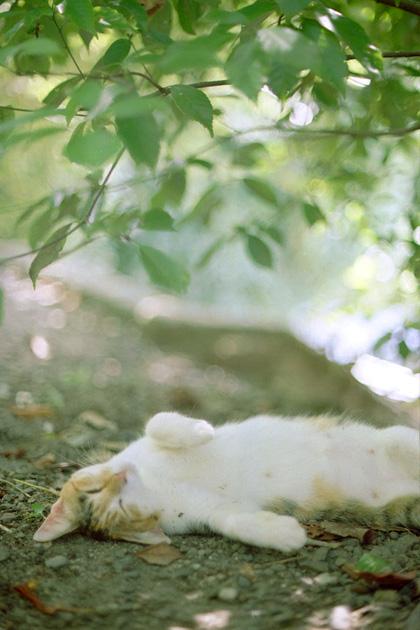 三毛猫ゴロン