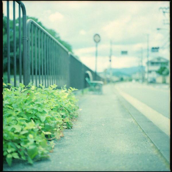 路傍/雑草