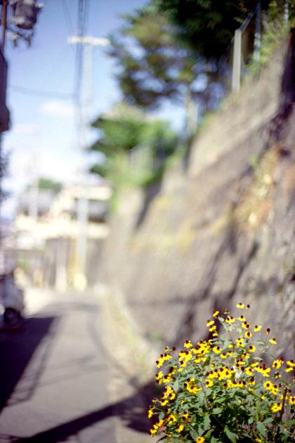路傍の花/清水
