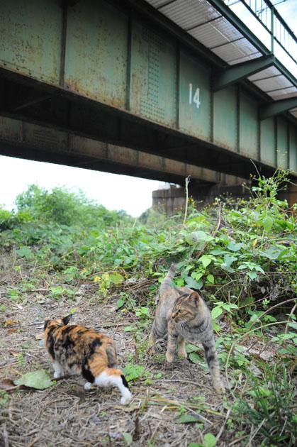 鉄橋下の猫