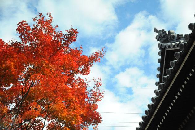 紅葉/妙蓮寺