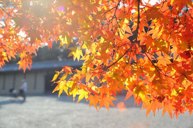 紅葉/京都御苑