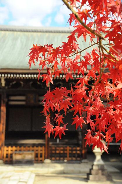 紅葉/妙顕寺