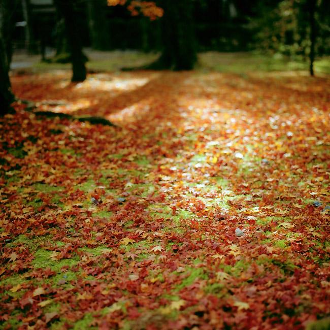 赤色の地面