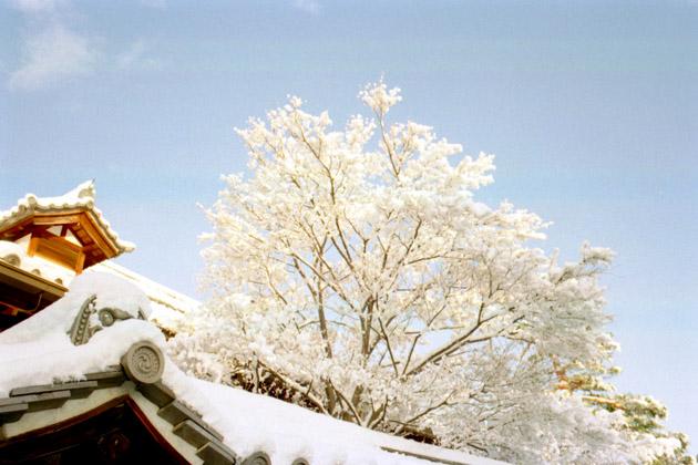 雪の朝/妙心寺境内