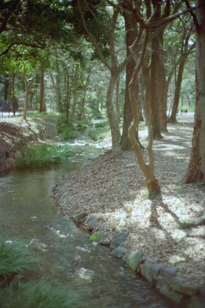 糺ノ森/木漏れ日