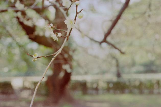 梅花点景1