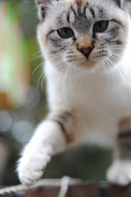 猫パンチ体勢