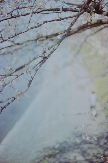 桜淡影/鴨川