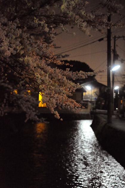 夜の薄紅/白川