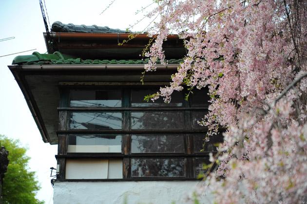 銀月アパートメントの桜