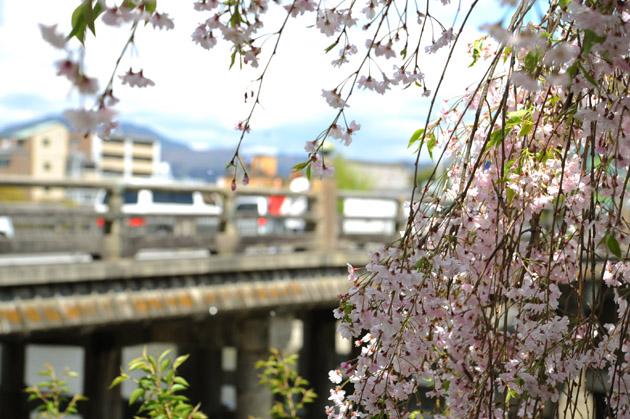 桜色/三条大橋