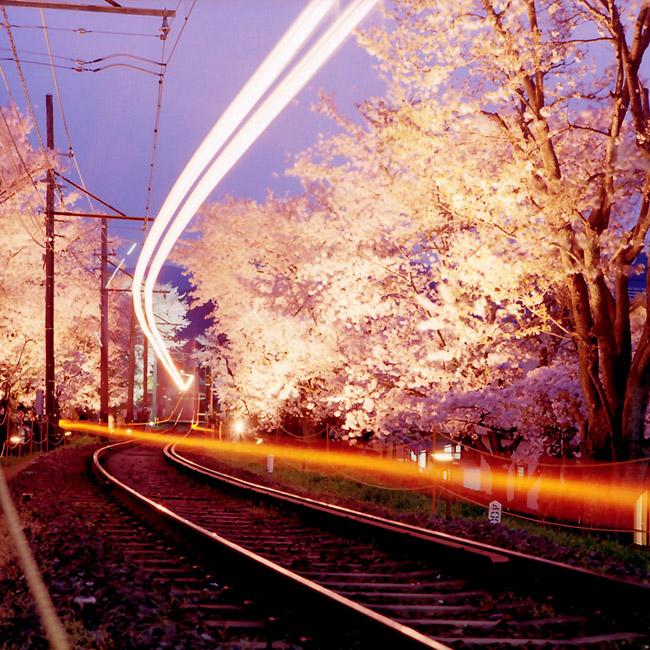 夜桜ライン/鳴滝