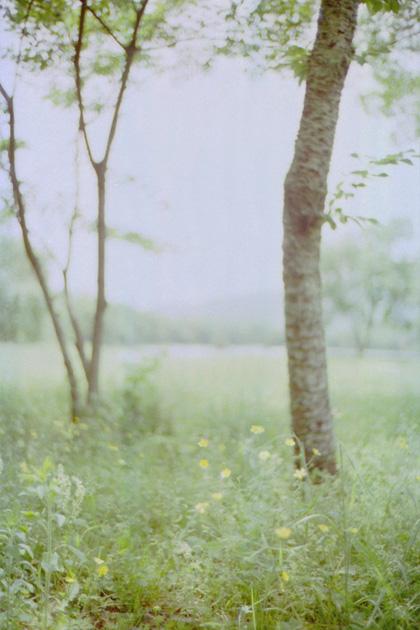 緑/大沢池