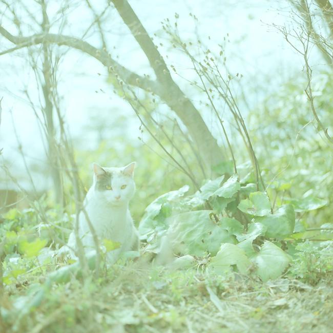三毛猫ハイキー