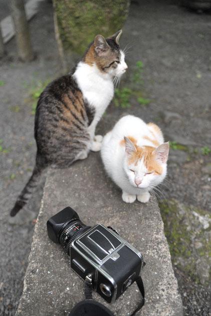 猫とハッセルブラッド