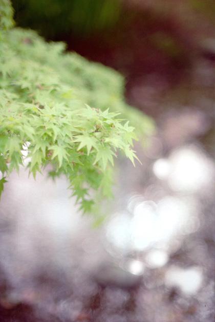 新緑キラキラ。
