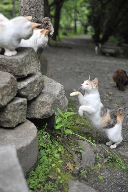 三毛猫ジャンプ