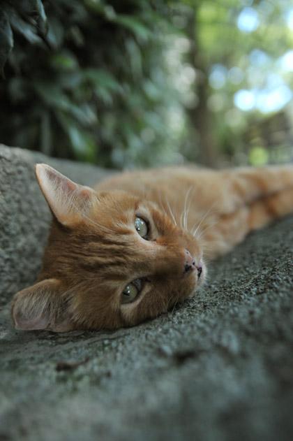 猫もグッタリ
