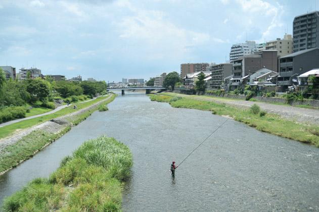 鮎釣り/鴨川