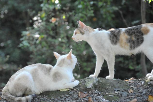 関係性/猫