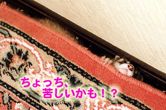 080902IMG_1508-2.jpg