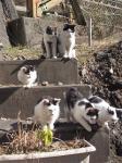 袋田の猫滝